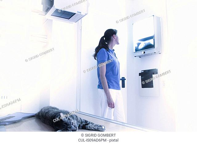 Vet treating domestic cat, looking at x-ray