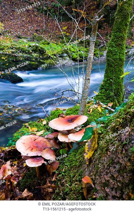 Forest mushrooms, River Curak in Zeleni vir/Croatia, long exposure tripod shot