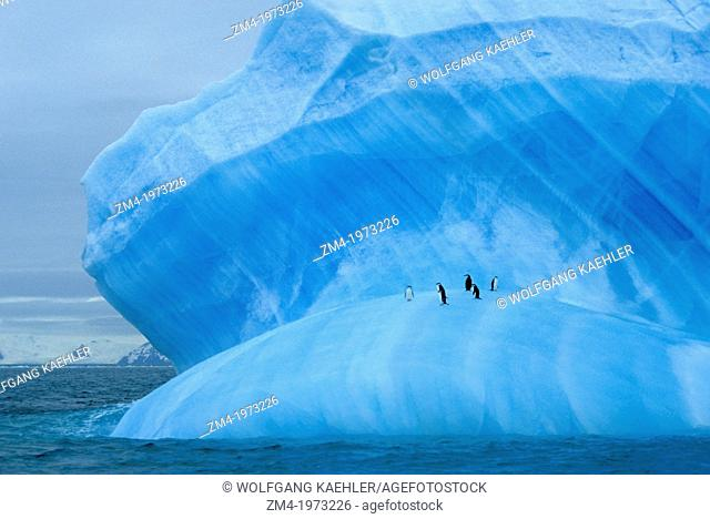 ANTARCTICA, CHINSTRAP PENGUINS RESTING ON BLUE ICEBERG NEAR ELEPHANT ISLAND