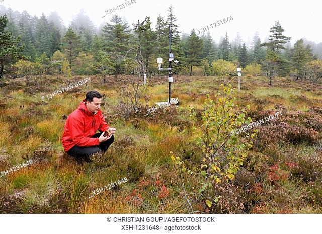 man showing Sphagnum in peat-bog of Bois Noirs, Livradois-Forez Regional Nature Park, Puy-de Dome department, Auvergne region, France, Europe