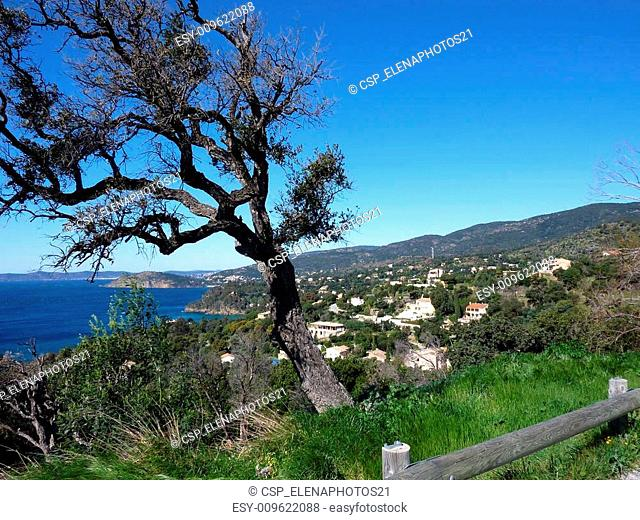 Bended tree and mediterranean sea