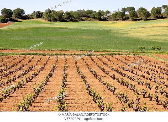 Vineyard and cereal field. Cuenca province, Castilla La Mancha, Spain