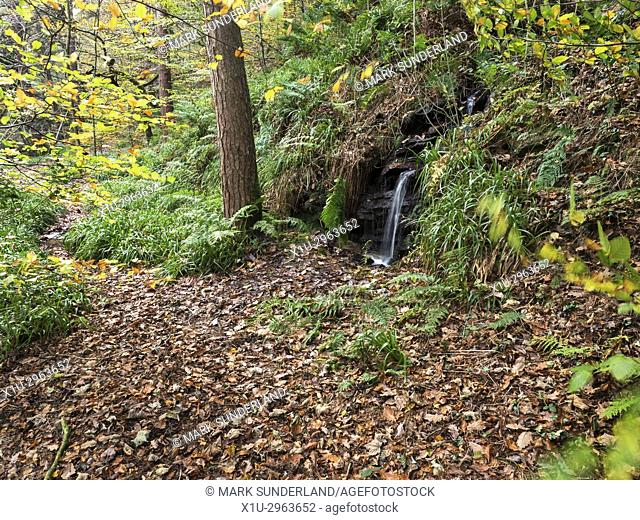 Small Waterfall and Fallen Leaves in Abel Cote Wood in Autumn near Pecket Well Hebden Bridge West Yorkshire England