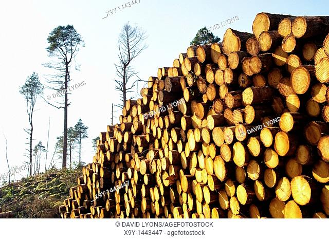 Softwood forestry conifer timber tree logging logs in Glen Carron, NE of Kyle of Lochalsh in the Scottish Highlands, Scotland