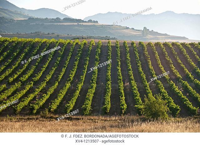 Laguardia La Rioja  Rioja Alavesa  Araba  Basque Country  Spain