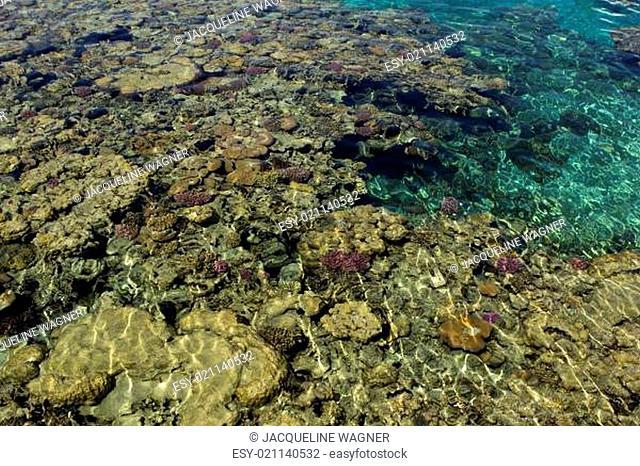 Ägypten Korallenriff mit einer tollen Farbenpracht