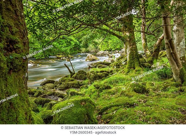 Trial along River Llugwy, Betws-y-Coed, Conwy, Wales, United Kingdom, Europe