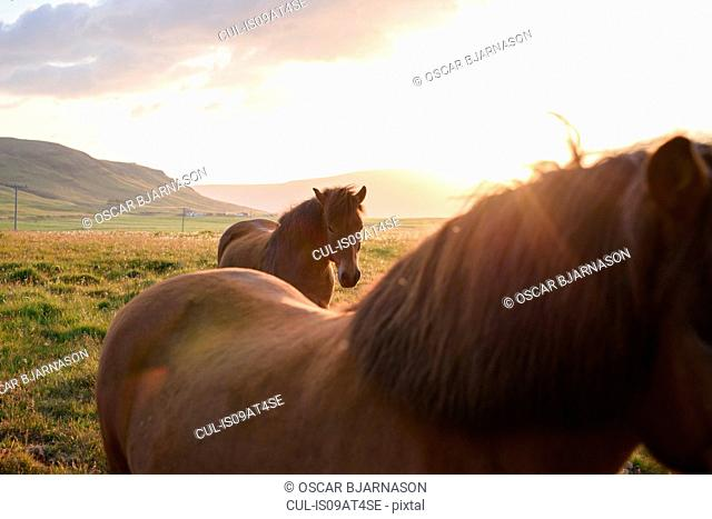 Cropped view of two horses and sunlight behind hills