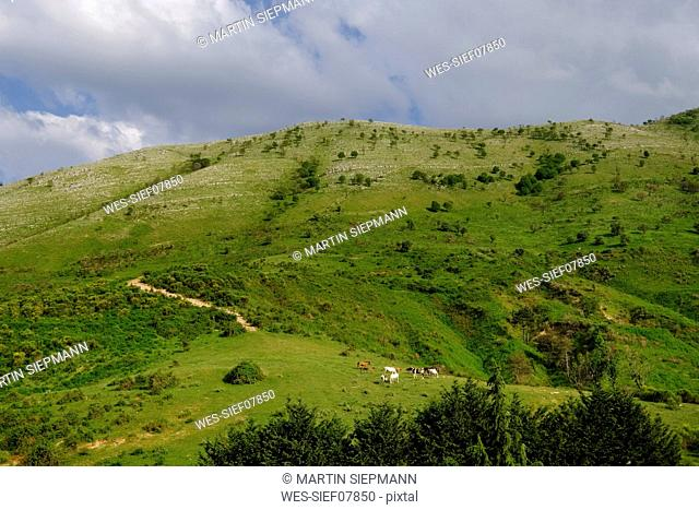 albania, Vlore County, Qafa e Muzines, horses on meadow