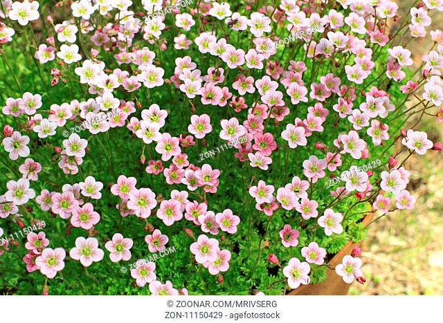 Floral background many bright flowers