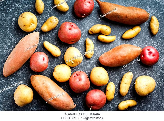 Variety of raw uncooked organic potatoes: red, white, sweet and fingers potatoes over dark texture background. Top view