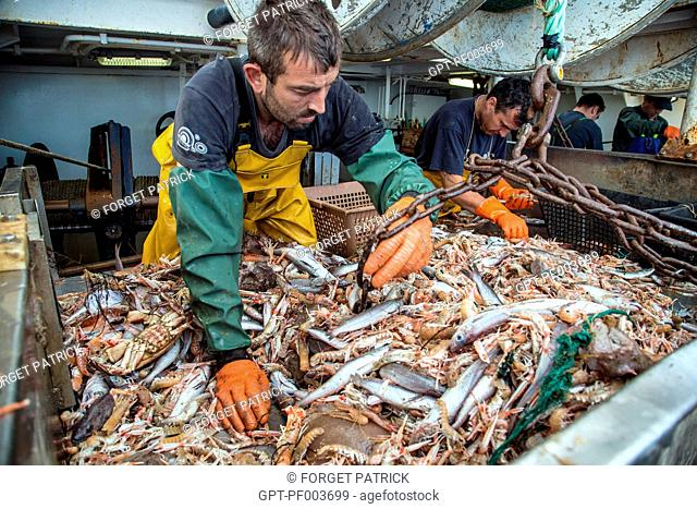 SAILORS AT WORK AT THE PRAWN AND FISH SORTING TABLE, SEA FISHING ON A SHRIMP TRAWLER 'QUENTIN-GREGOIRE' OFF THE COAST OF SABLES-D'OLONNE, (85) VENDEE