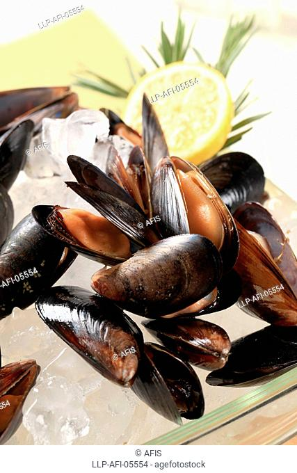 Raw mussels on ice