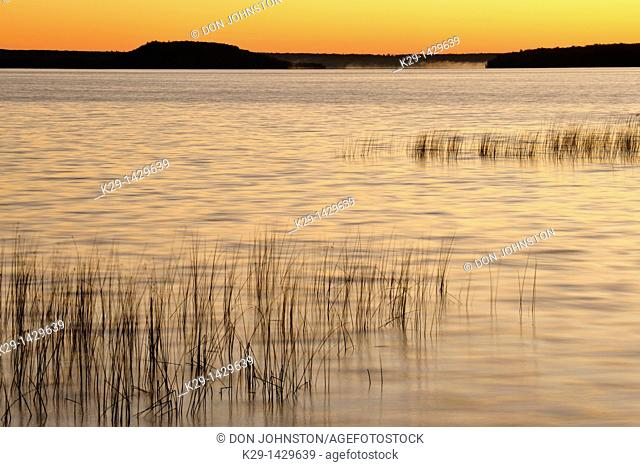 Reedbeds on Lake Mindemoya at sunrise Mindemoya Manitoulin Island Ontario