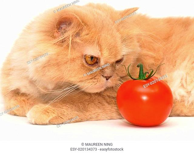 Cat trying to smell tomato