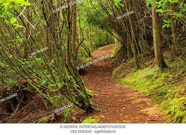 Tahkenitch Dune Trail, Oregon Dunes National Recreation Area, Oregon