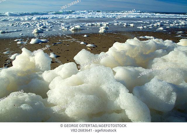 Sea foam, Pacific Coast Scenic Byway, Gleneden State Park, Lincoln City, Oregon