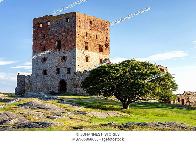 The huge residential tower of the Hammershus castle ruin (13th century) in the evening light, Europe, Denmark