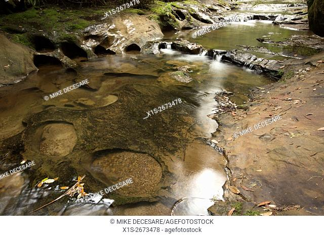 Pools of water along Blooms Creek in the Redwoods in Southern California show weathering in the rocks