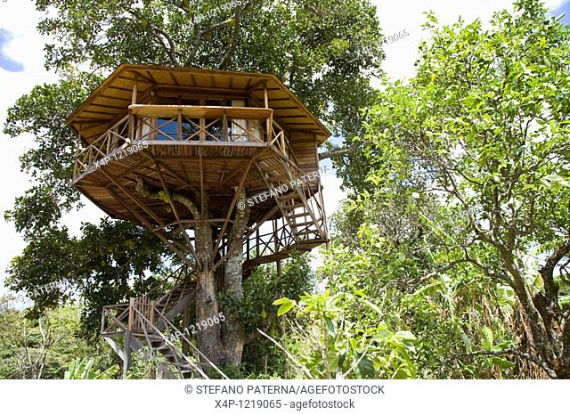 Tree House, Capao, Bahia, Brazil
