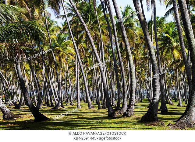 Mororé beach, Boipeba island, Bahia, Brazil