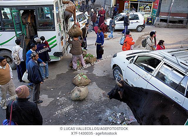 Street scene in Main square, McLeod Ganj, Dharamsala, Himachal Pradesh state, India, Asia