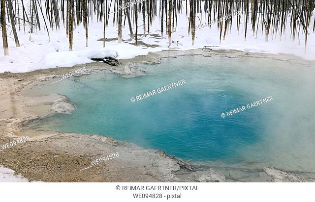 Turquoise water of Cistern Spring with dead trees in winter at Norris Geyser Basin Yellowstone Park