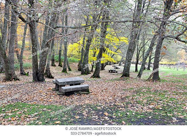 Recreative Area at Castañar de El Tiemblo (El Tiemblo Chestnut forest). Sierra de Gredos. Avila Province. Castile-Leon. Spain