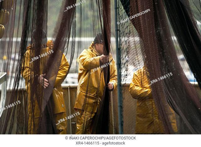 Fishermen at work, Port of Getaria, Getaria, Guipuzcoa, Gipuzkoa, Euskadi, Basque Country, Spain