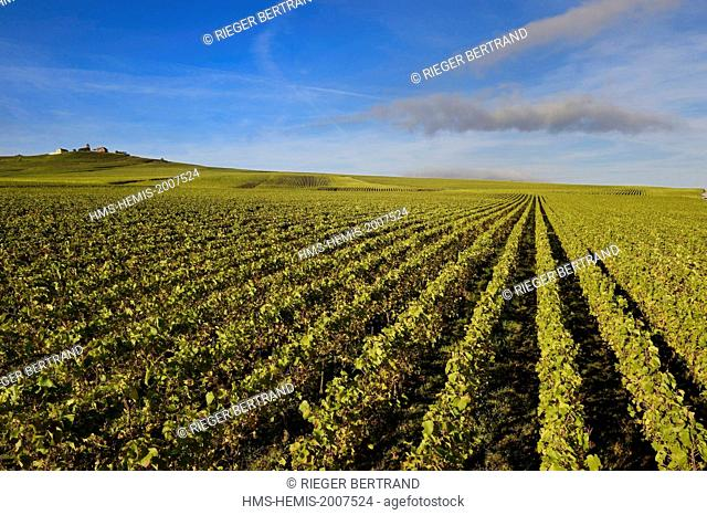 France, Marne, regional park of Montagne de Reims, Verzenay, Champagne vineyards