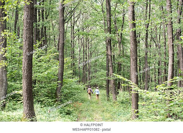 Back view of senior couple walking hand in hand in the woods