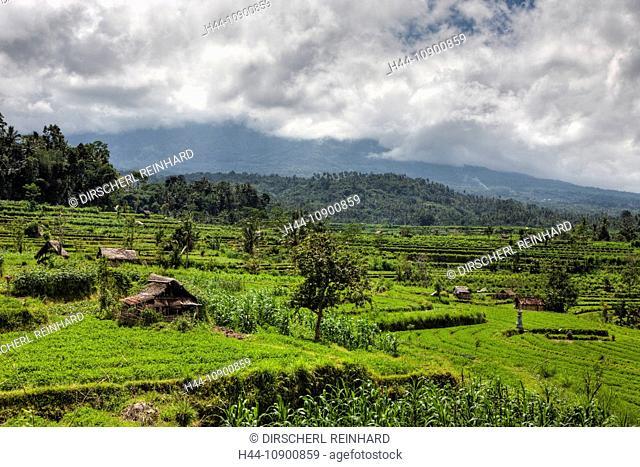 Ricefield, Ricefields, Rice Field, Rice terrace, terrace, terrace, offset, food, foodstuff, biomaterial, nourishment, paddy, rice, field, field work, farmer