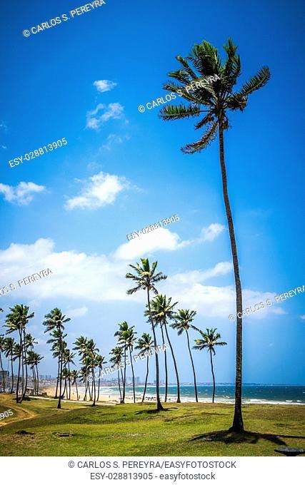 Beach in Salvador Bahia Brazil Southamerica