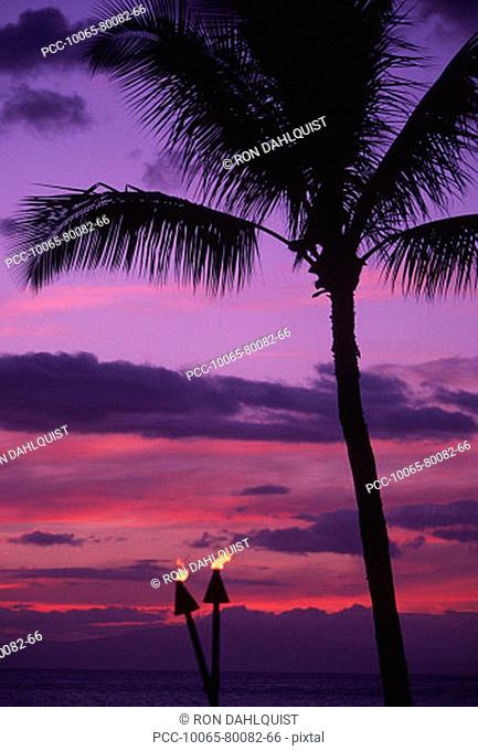 Palm tree in a bright pink and purple sunset sky with tiki torches
