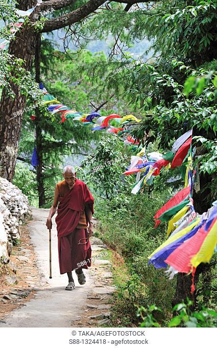 Tibetan monk walki through peaceful little pass