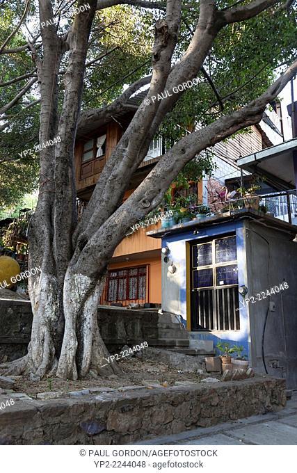 Home and an Indian Laurel tree along the Escaleras del Fortín in Oaxaca City - Oaxaca de Juárez, Centro District, Valles Centrales, Oaxaca, Mexico
