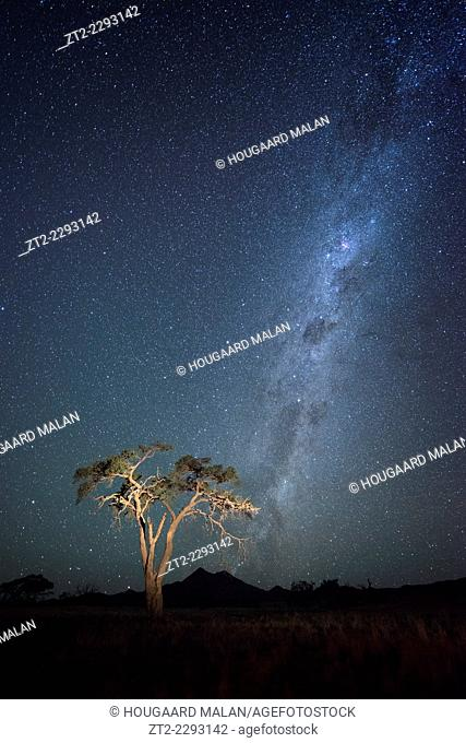 Wide angle landscape photo of starry night skies over a Namibian camelthorn tree. Namib Rand, Namibia