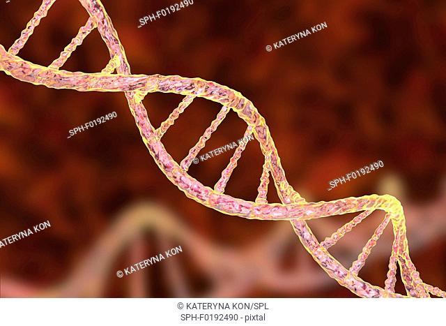 DNA molecule, illustration