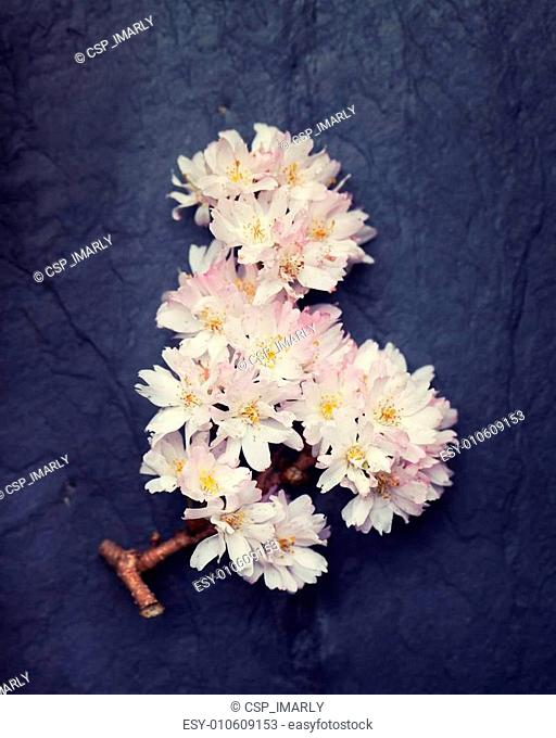 Beautiful and relaxing spring flowers on a dark tile background