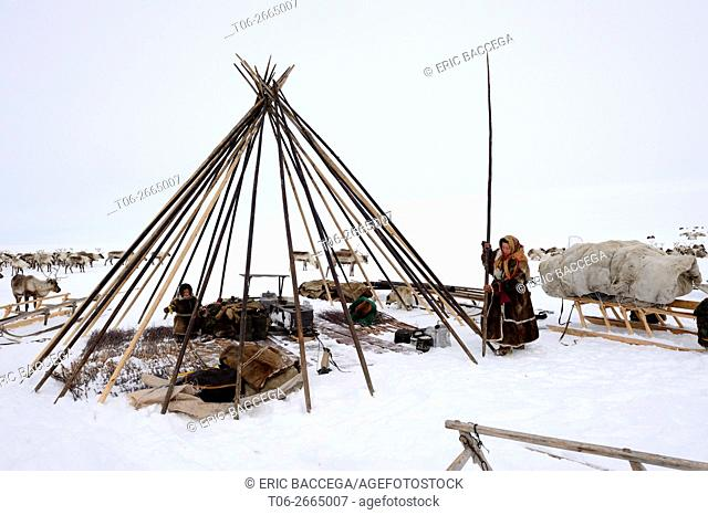 Nenets herders building their tent / Chum in the tundra, Yar-Sale district, Yamal, Northwest Siberia, Russia