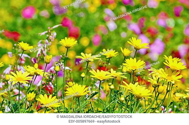 beautiful yellow flowers in floral background