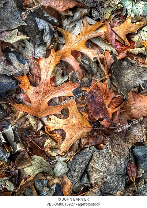 Dead and decaying leaves in early winter