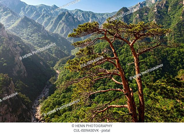 Elevated view of valley and mountains, Seoraksan National park, Gangwon, South Korea
