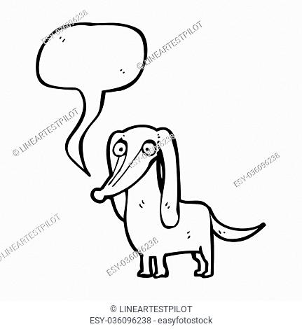 Dachshund Rough Stock Photos And Images