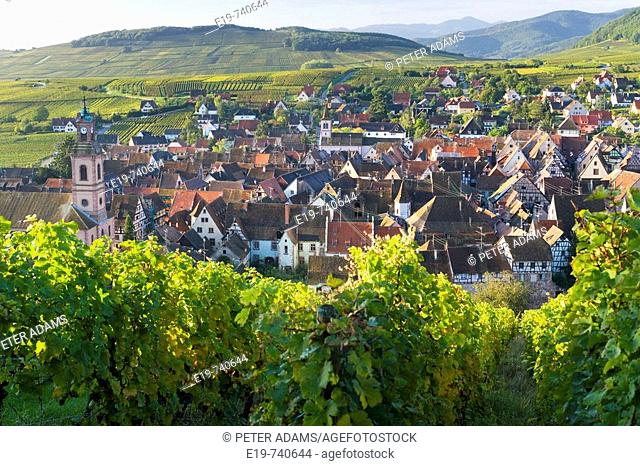 Old wine town of Riquewihr & vineyard, Alsace, France