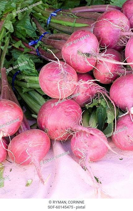 Bunch of pink radishes