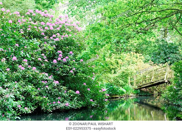 Wooden bridge and rhododendron