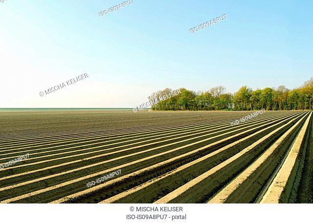 Ploughed fields, Espel, Noordoostpolder, Netherlands