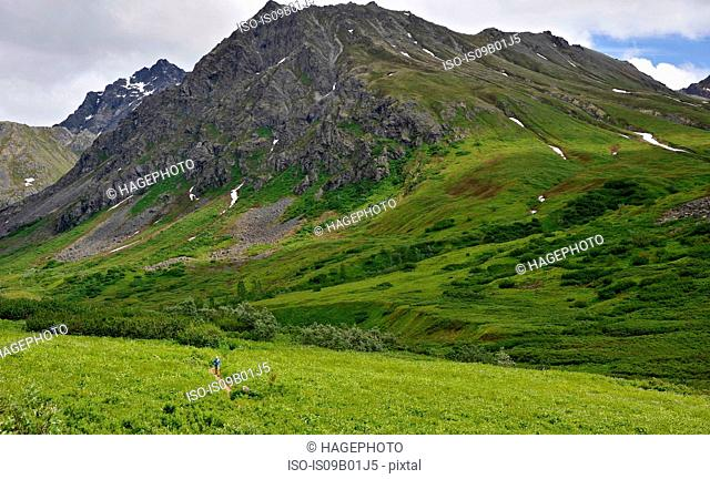 Distant view of woman running the Gold Mint Trail, Talkeetna Mountains near Hatcher Pass, Alaska, USA