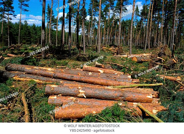 Wood Harvest after a Storm, Gifhorn, Lower Saxony, Germany